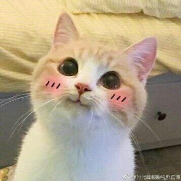 可爱的微笑猫咪头像